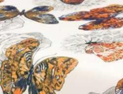 Butterfly05